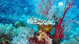 Fantastisches Korallenriff Raja Ampat - Wartezimmer-TV - Korallendreieck