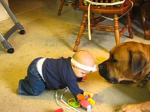 baby and the boerboel