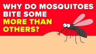 Scientists Finally Know Why Mosquitoes Bite Some People More Than Others  Mystery Revealed