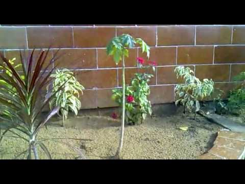 Small Home Garden Karachi Pakistan YouTube
