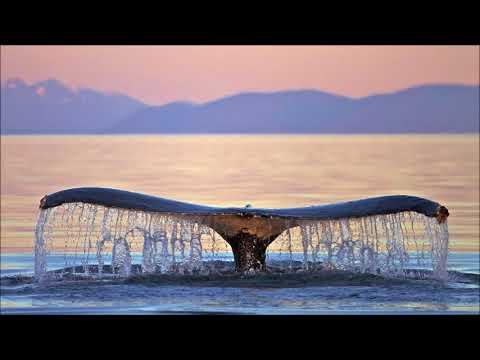 Canto de Ballenas Para Relajarse y Aliviar el Estres por Una Hora
