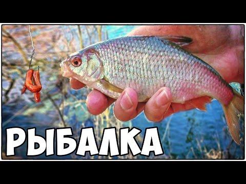 рыбалка на плотву красноперку весной