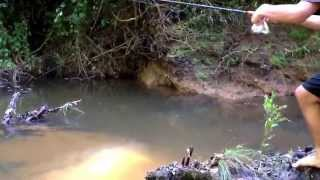 Creek fishing for chubs