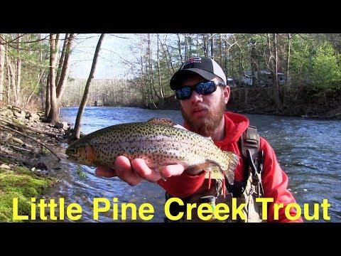 Trout Fishing Pennsylvania's Little Pine Creek