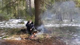 Март природа весна лес тайга музыка релаксация The nature of Russia Какая Россия