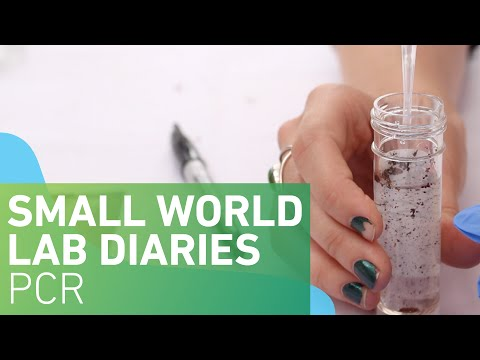 Small World Lab Diaries 7: PCR