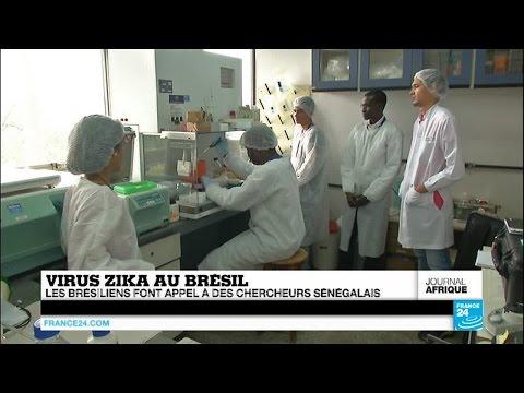 Virus Zika : des chercheurs sénégalais à la rescousse de leurs collègues brésiliens