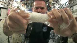Wringing out a Water Soaked Washcloth in Space | CSA Science HD Video