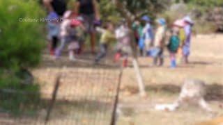 Texas preschool allegedly ran kiddie fight club to 'un-teach' fighting is fun   ABC7