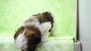 「きくちペット」かわいい子犬子猫の専門店です。神奈川に3店舗のネット...