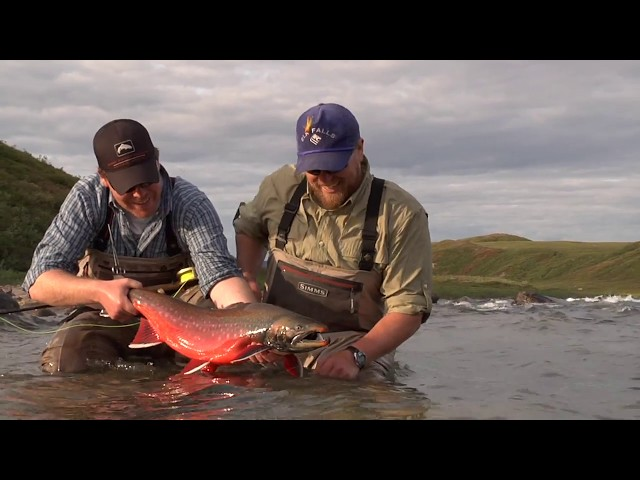 Arctic Char | Plummer's Arctic Lodges