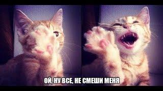 Котята танцуют! Самое смешное видео в мире!! Такого вы еще не видели!!!