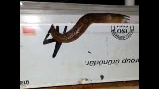 slug bug documantry