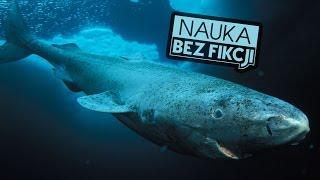 Najdłużej żyjące zwierzęta   Nauka BEZ fikcji #13