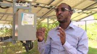 Farming In Somalia: Farmers Use Solar Energy to Irrigate Their Farms