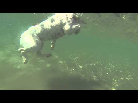 Teddy The Dog Swimming in the ocean