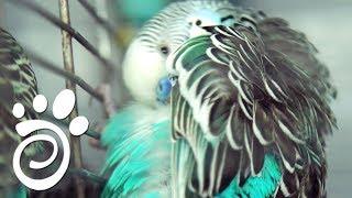 Птицы, Перья и Паразиты: Защищаем и Помогаем. Все О Домашних Животных