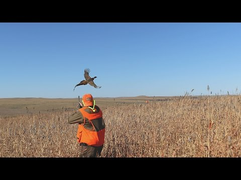 Lazy J Grand Lodge - Wild Pheasant Hunting Mecca