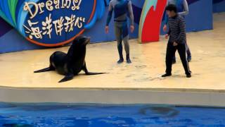 guy falls into water while trying to kiss sea lion so funny