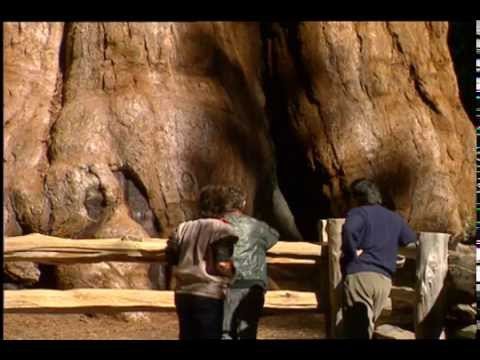 Sequoia & Kings Canyon ~ Official Trailer