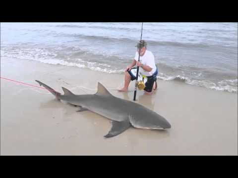 How To: Land-based Shark Fishing - Species