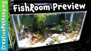 Did the baby fish SURVIVE? | Neolamprologus Multifasciatus Dwarf Cichlids