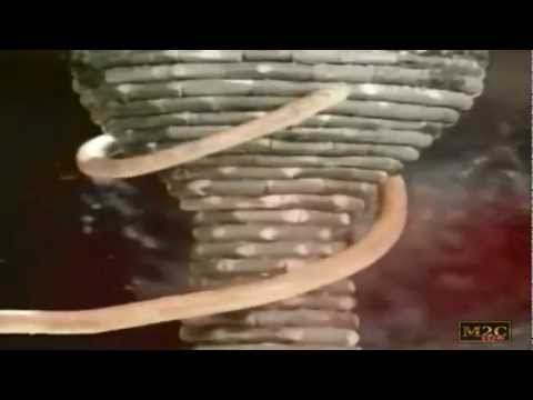 Peter Gabriel - Blood Of Eden  (subtitulado En Español)