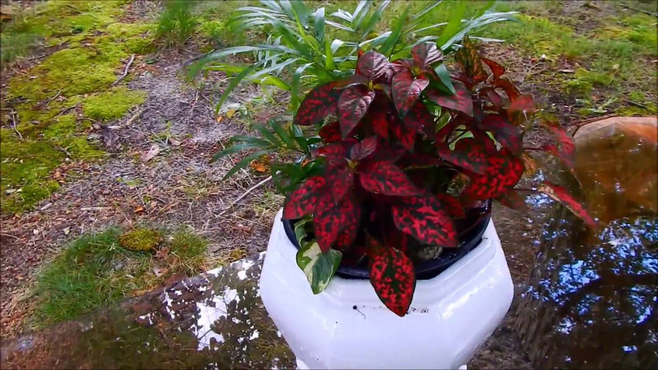 plantas de sombra youtube