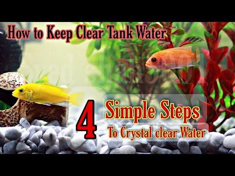 4 Simple Steps To Crystal Clear Water Of Aquarium Hindi Urdu English Sub #aquariumclean