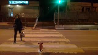 Собака и пдд