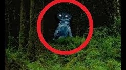 10 forest creatures caught on camera in real life!