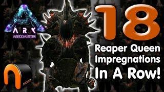 ARK - 18 REAPER QUEEN IMPREGNATIONS IN A ROW! - 100% EFFECTIVE PROVEN!