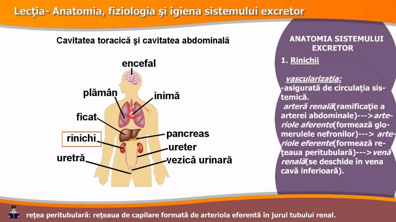 Categorie:Boli ale sistemului urinar