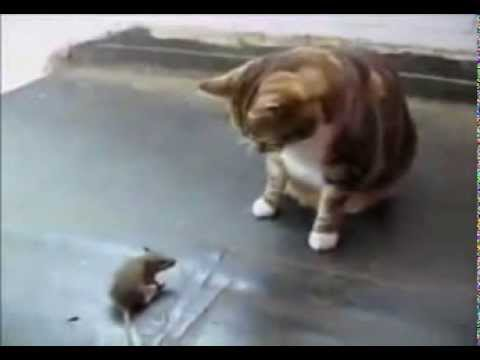 cat vs mouse قط ضد فار