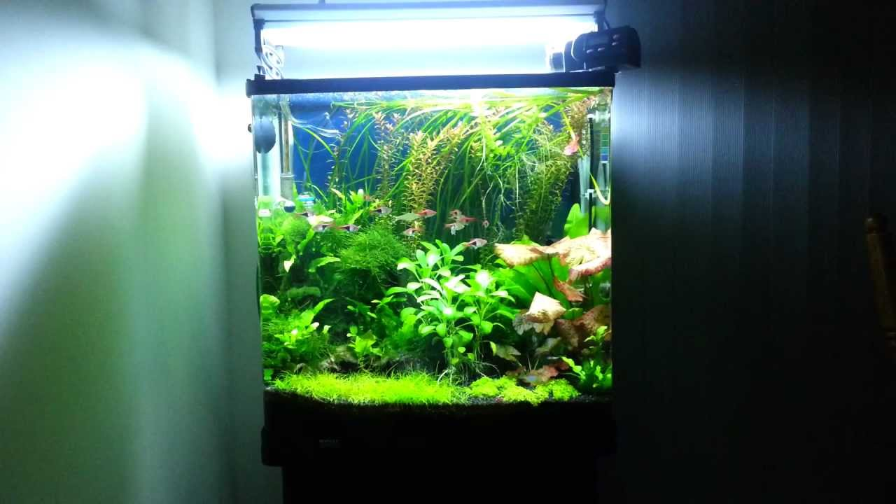 & Aqua One 620T Fresh Water Planted Tank. - YouTube azcodes.com