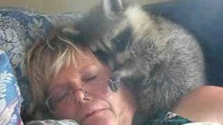 Naptime for me and my raccoon, Buster..