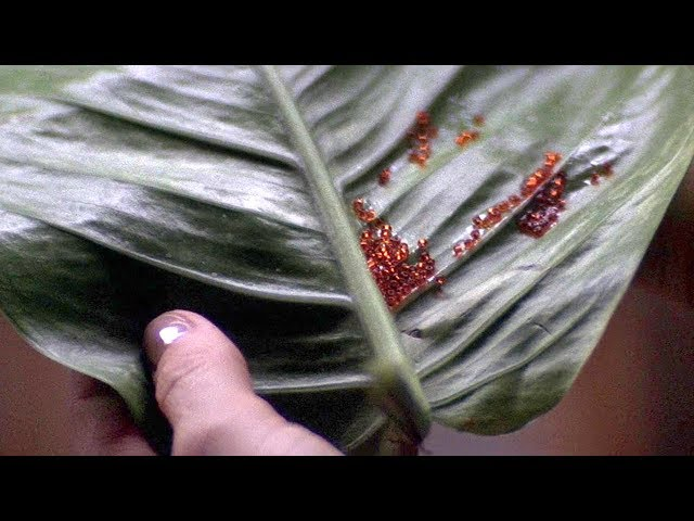 神奇树叶上寄生不明物质,它能改变生物基因,让人类变成怪兽!