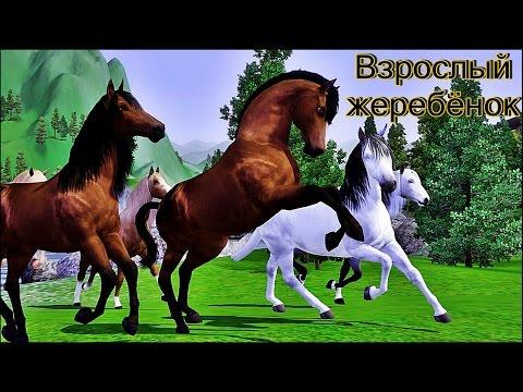 Симс 3 - Дикие лошади (Взрослый жеребёнок)
