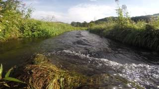 Driftless Stream Serenity