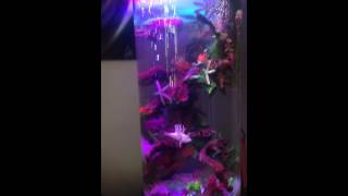 Aquarium Set Up  Tropical Fish Tank  Interior Design By Vipz  Only
