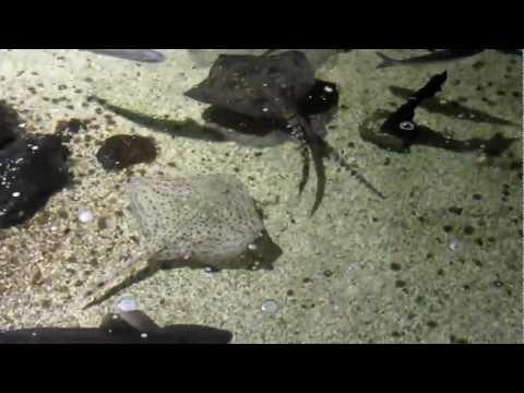 Maryport Coastal Aquarium