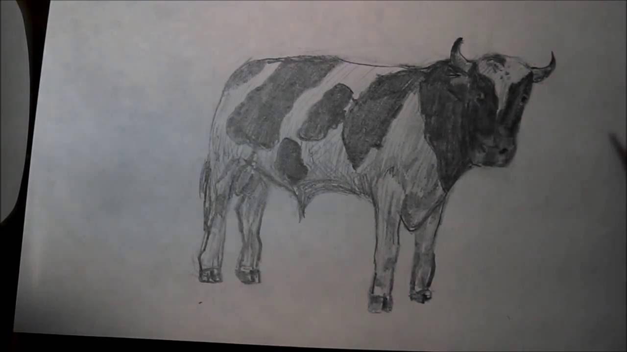 How To Draw A Bull Como Dibujar Un Toro Youtube