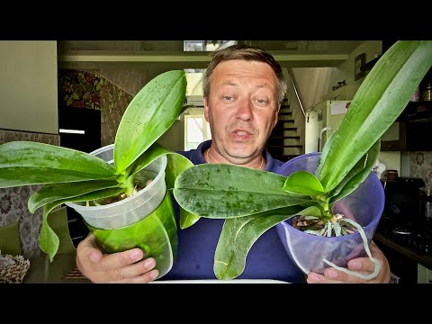 Вопрос: Как все-таки лучше содержать орхидею- на подоконнике или вглуби комнаты?