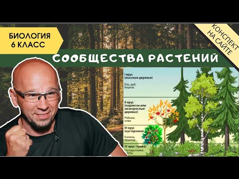 Растительные сообщества природы. Биология 6 класс. Фитоценоз. Симбиоз растений и их взаимодействие