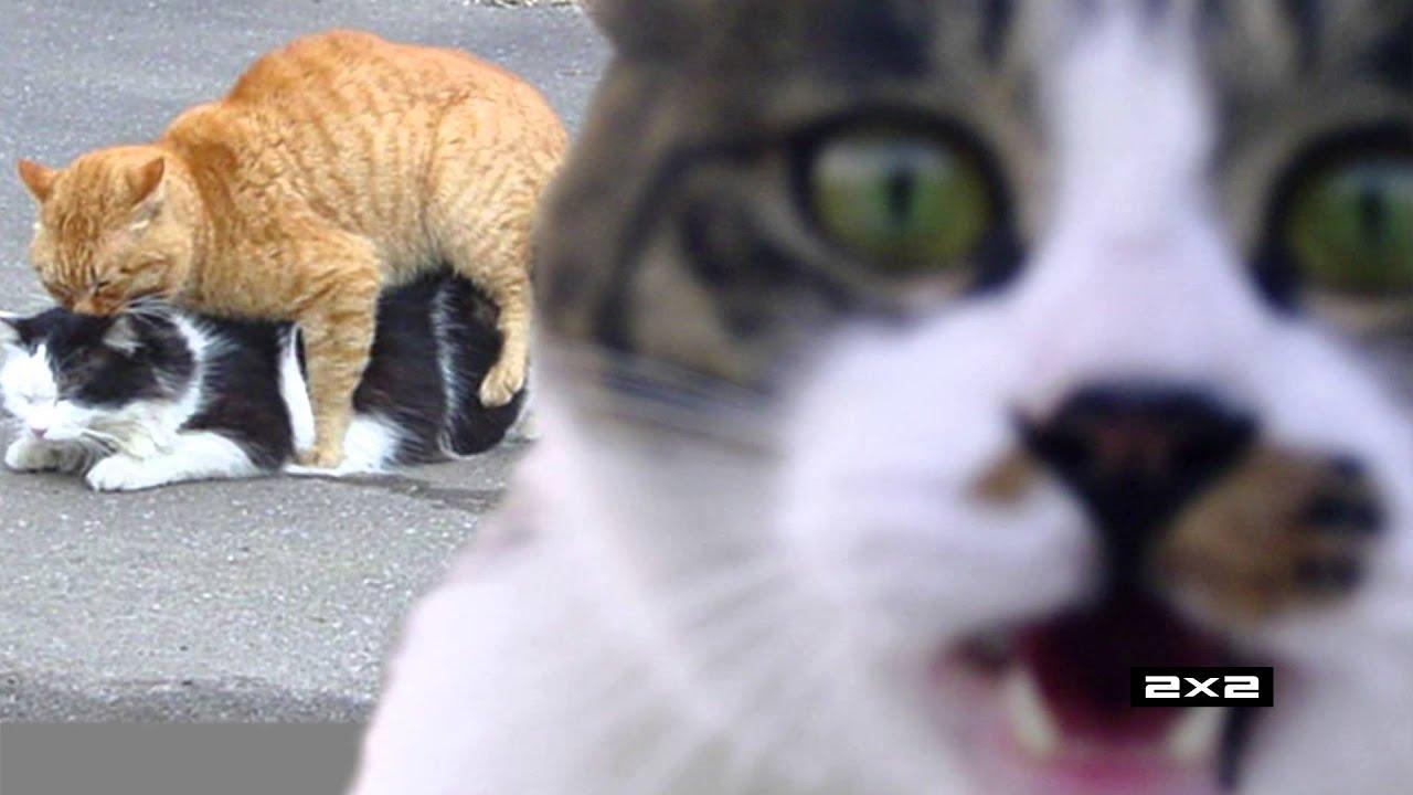 картинки кошки на заставку