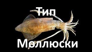 9. Моллюски - строение (7 класс) - биология, подготовка к ЕГЭ и ОГЭ 2019