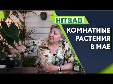Комнатные Растения в Мае ✔️ Уход За Комнатными Растениями 🌺 Советы От Хитсад ТВ