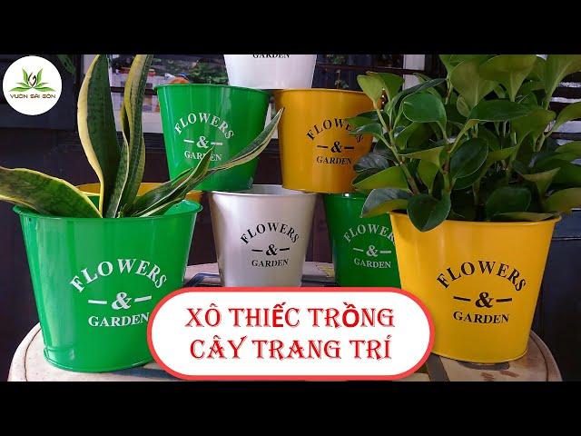 Xô thiêc trồng cây trang trí - Vườn Sài Gòn 0909 1234 09
