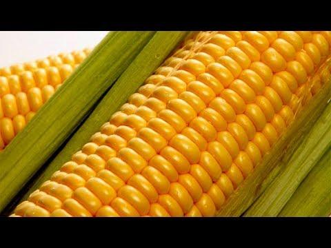 Как насадить кукурузу на крючок.