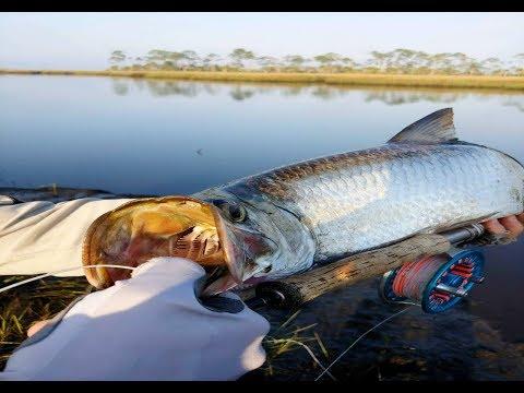 Fly Fishing For Tarpon In Florida